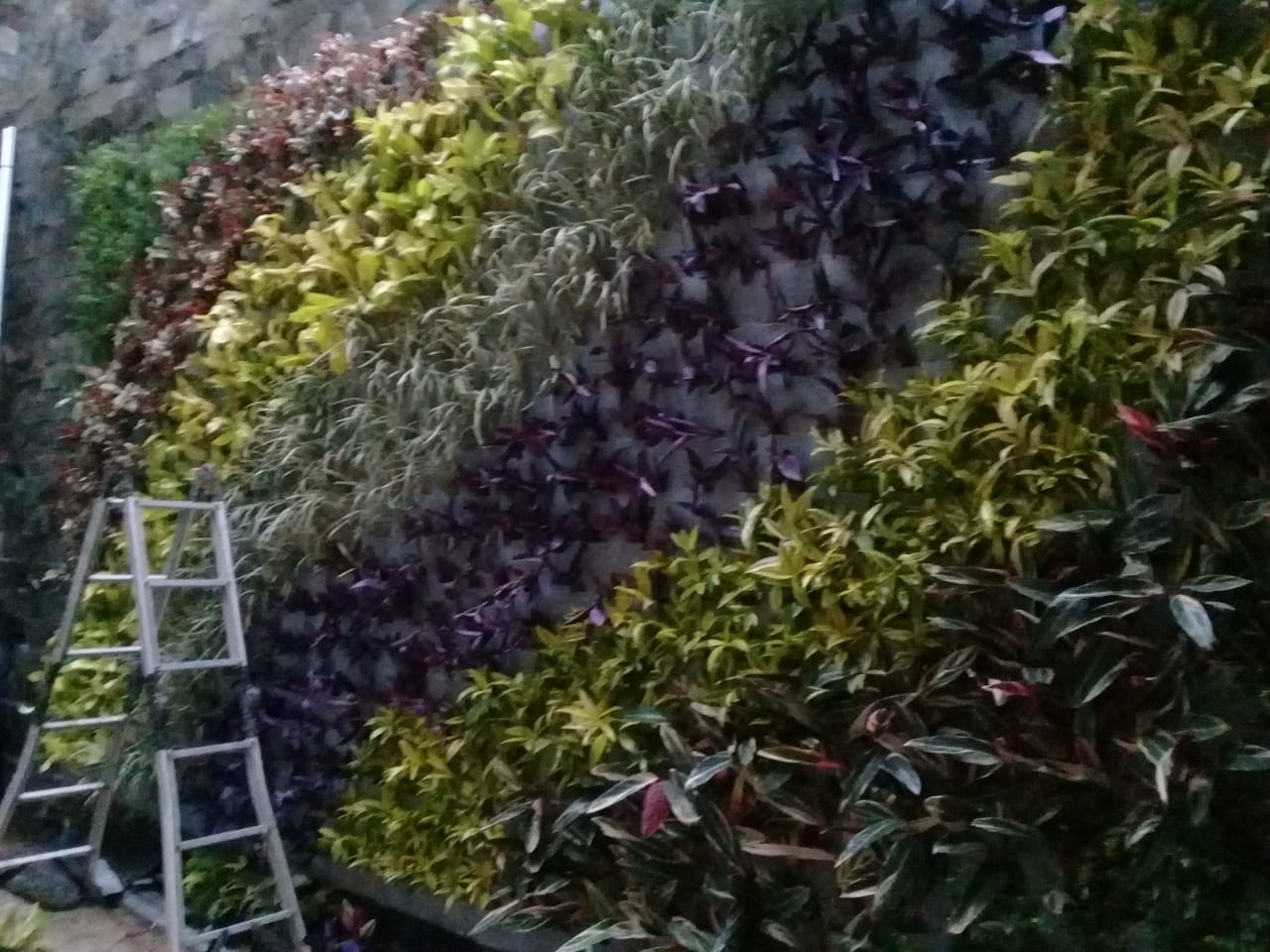 Tukang Taman Vertical Cibinong
